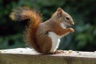 EUA: Los Angeles fecha parque por esquilo infectado com peste negra